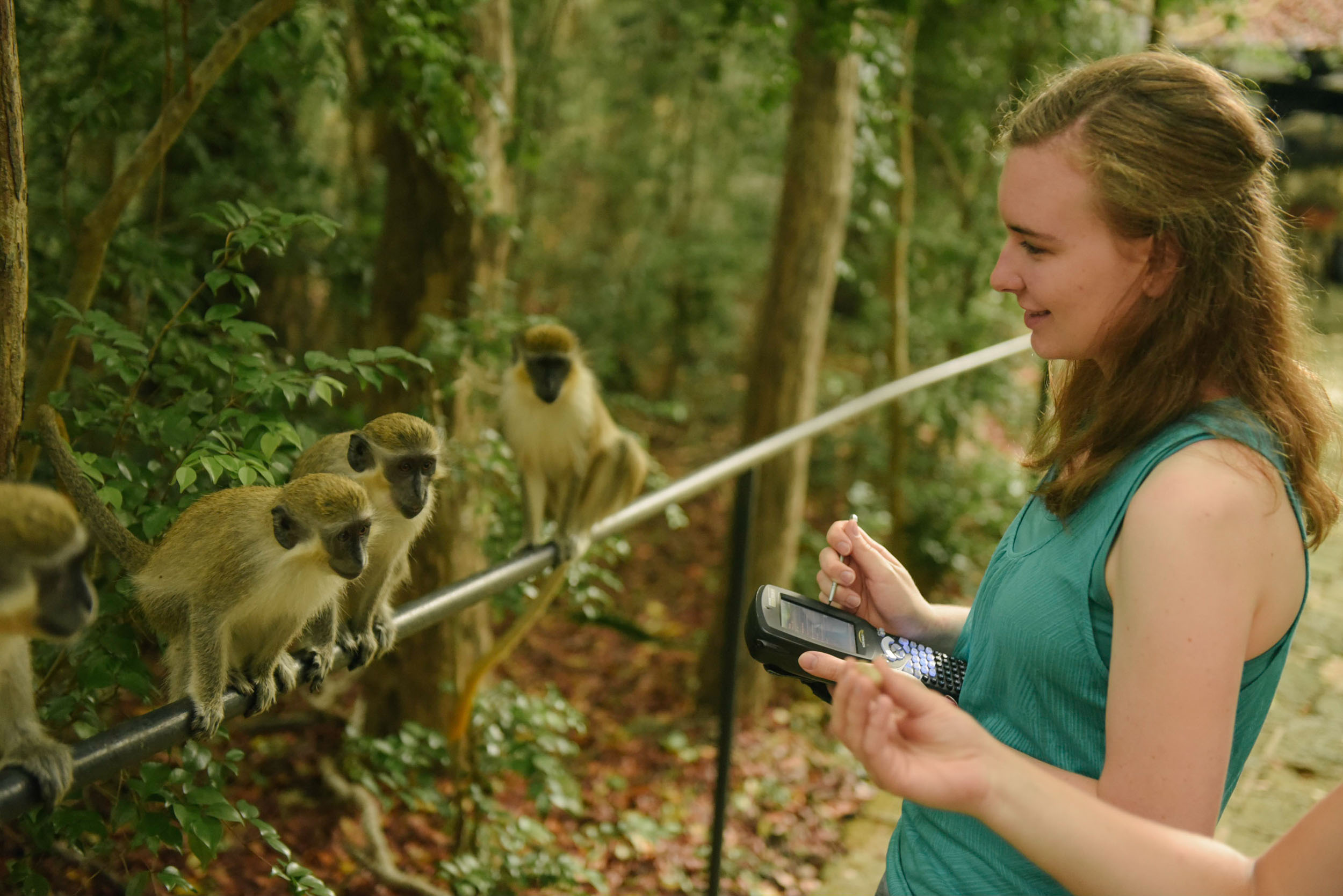 Primate Research Barbados Study Abroad 2017